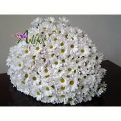 Buchet de 33 crizanteme