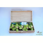 Aranjament orhidee si vin alb in cutie lemn natur